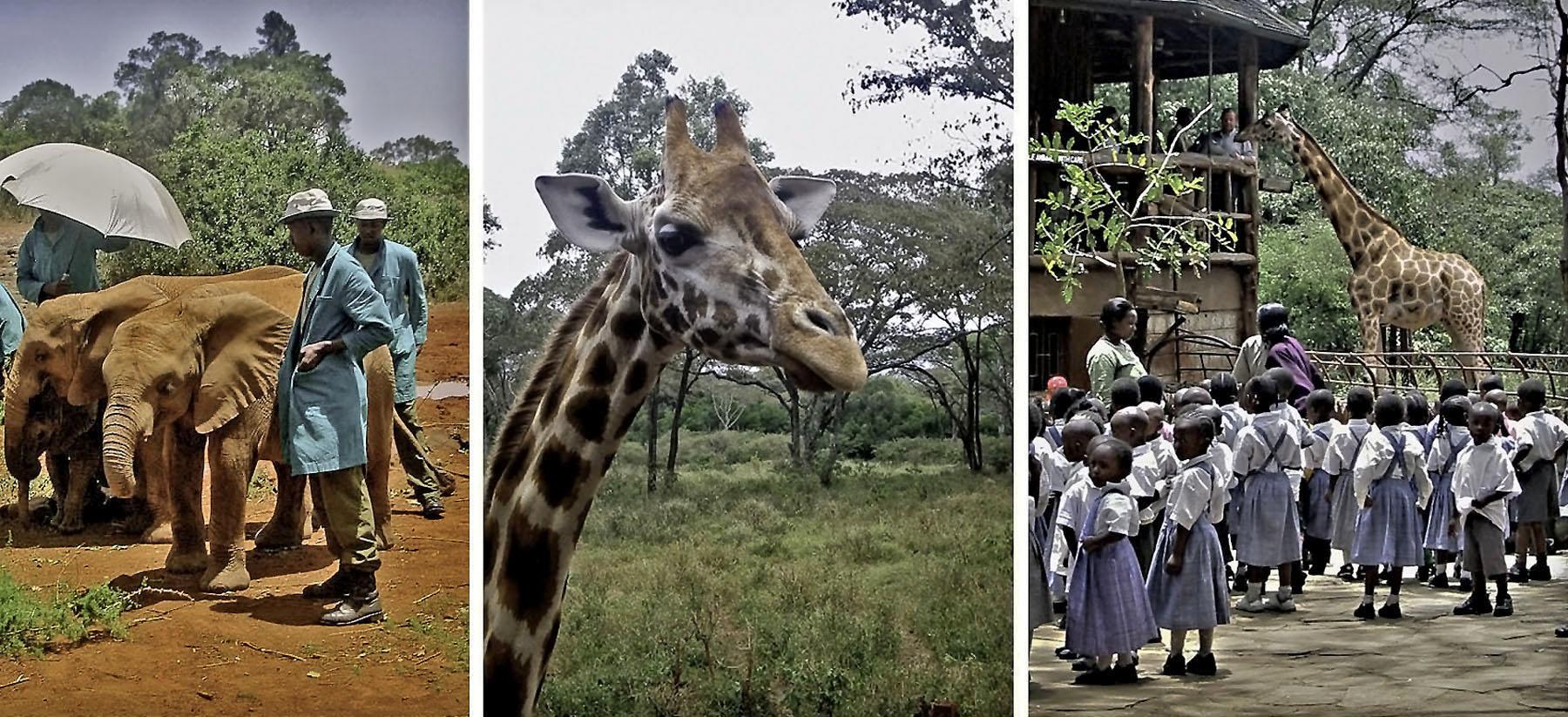 Africa Kenya Nairobi Sheldrick Elephant Orphanage Giraffe Centre