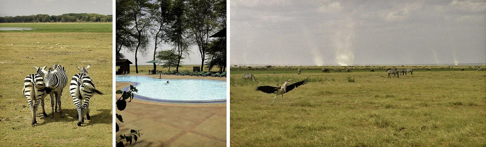 Africa Kenya Amboseli Zebra Swimming Pool Marabou Stork