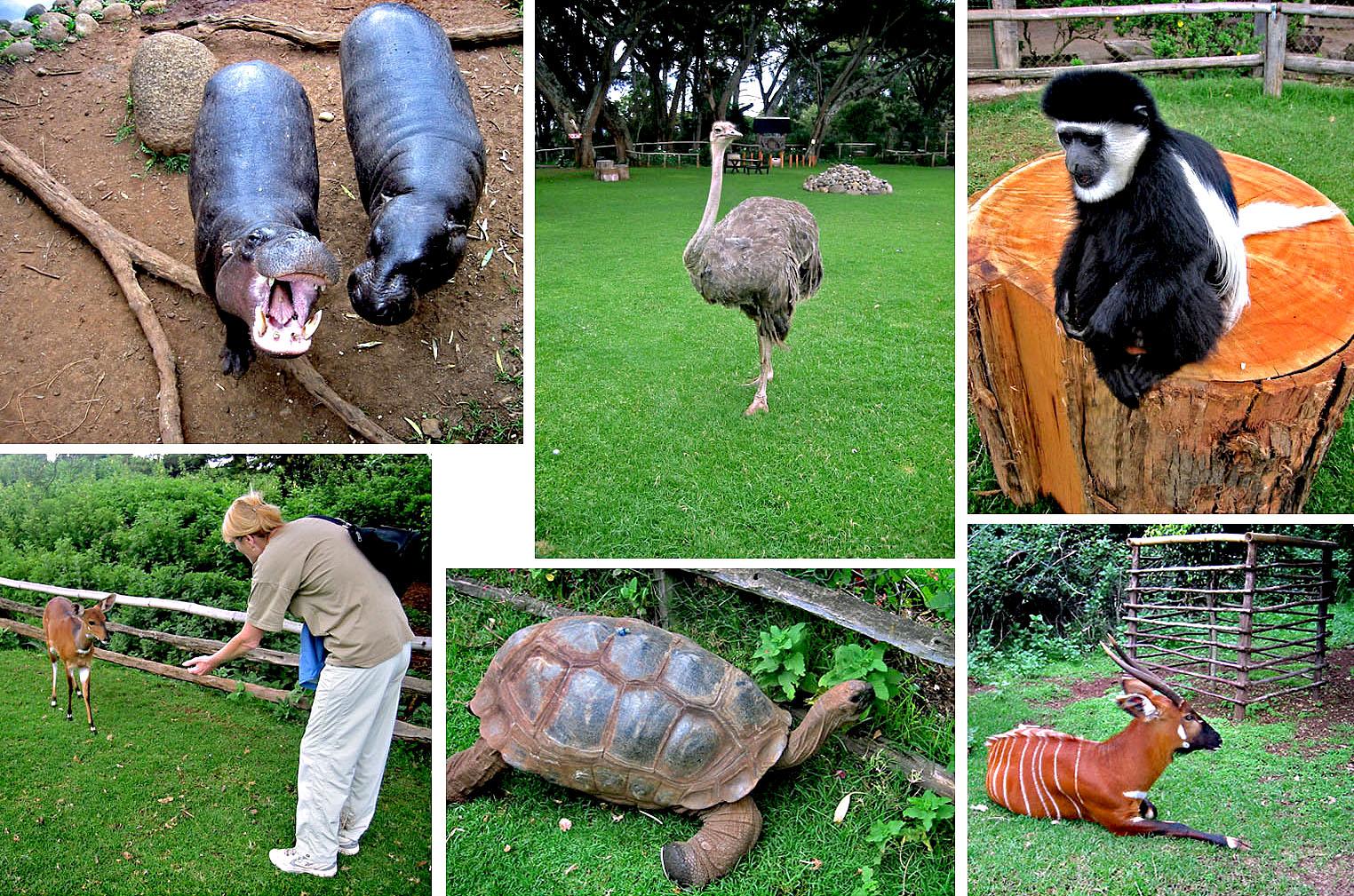 Africa Kenya Nanyuki Mount Kenya Wildlife Conservancy